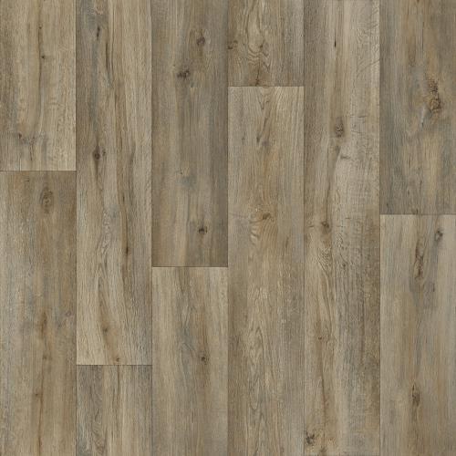 Silk Oak 59533